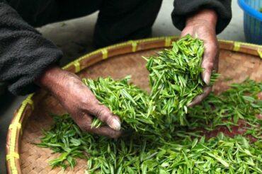 Koreanischer Tee