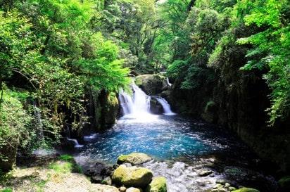Sencha Grüner Tee Premium aus Kikuchi